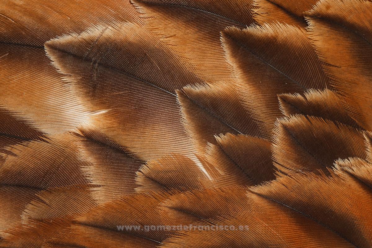 Milano real (Milvus milvus) - Atención al detalle - J L Gómez de Francisco. Fotografía de detalles de la naturaleza - Photography of patterns in nature