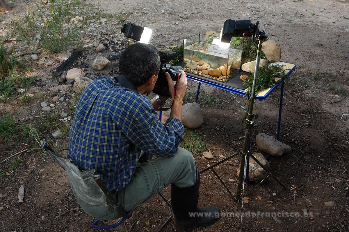 Fotografiando en un acuario. España - Making of - J L Gómez de Francisco. Fotografía de making of - Making of