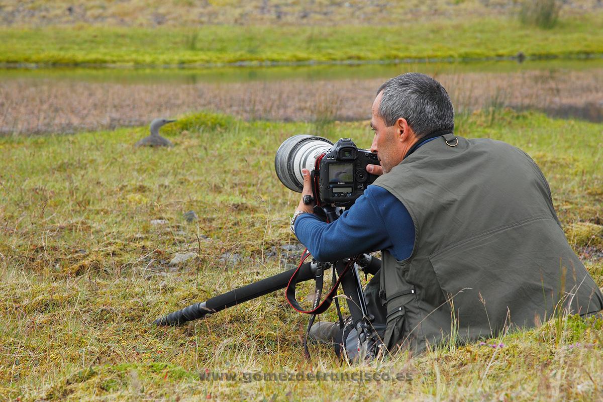 Fotografiando colimbo chico (Gavia stellata). Islandia - Making of - J L Gómez de Francisco. Fotografía de making of - Making of