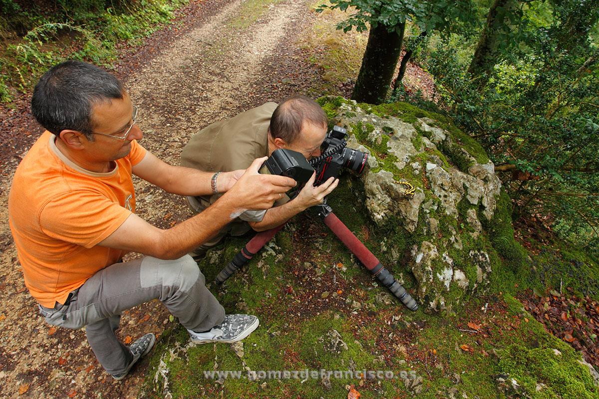 Fotografiando salamandra (S. salamandra). España - Making of - J L Gómez de Francisco. Fotografía de making of - Making of