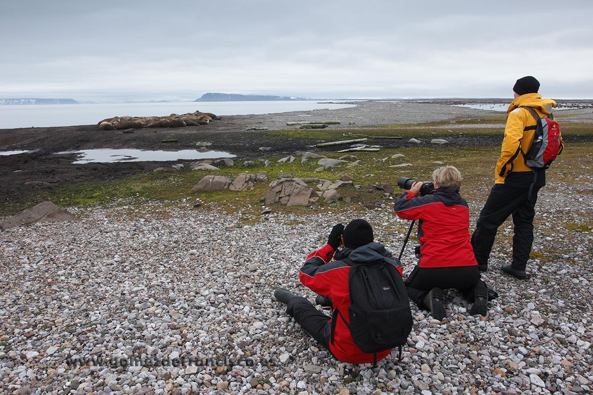 Fotografiando morsas (Odobenus rosmarus). Svalbard - Making of - J L Gómez de Francisco. Fotografía de making of - Making of
