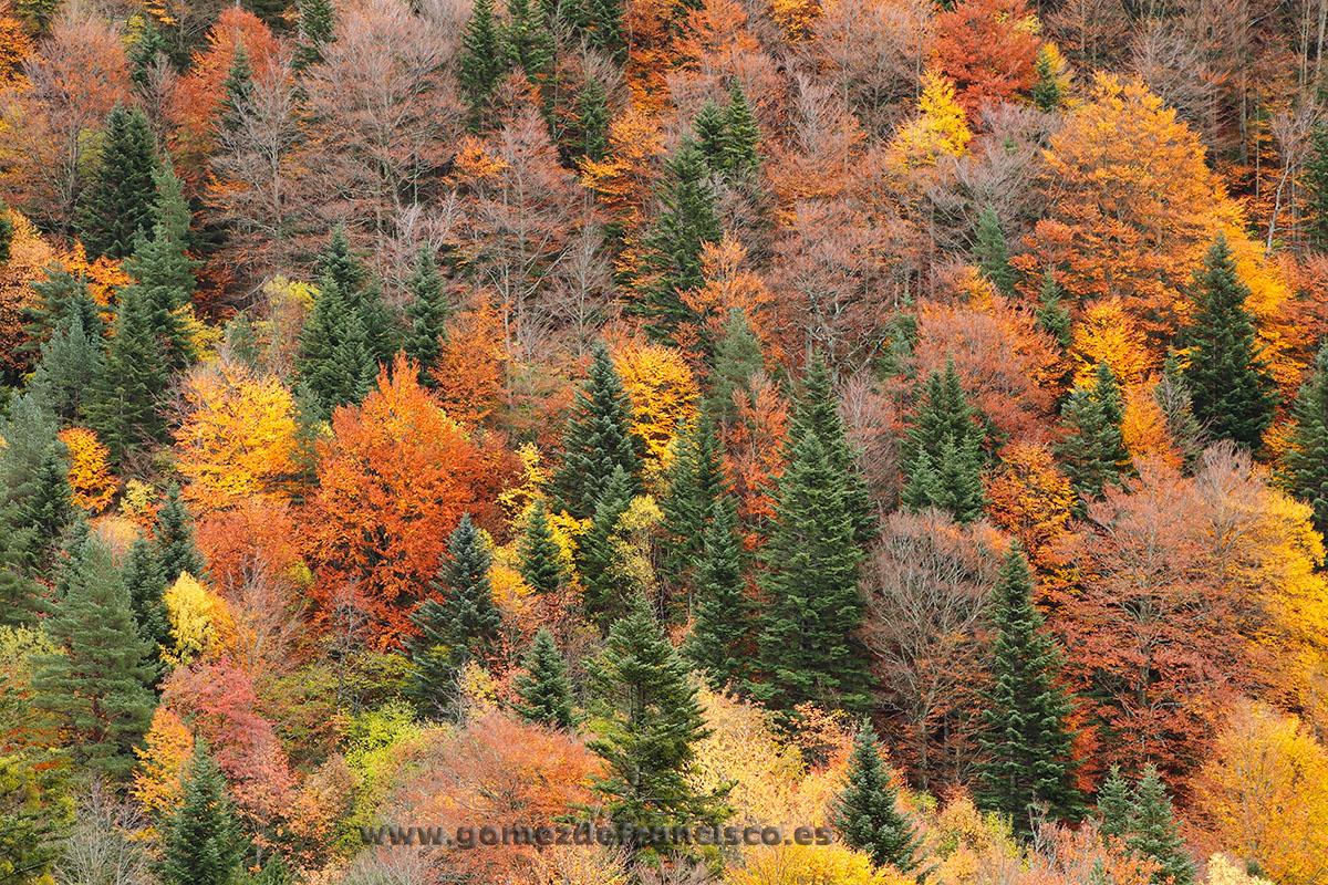 Otoño en el Valle de Bujaruelo, Parque Nacional de Ordesa y Monte Perdido (Huesca) - España - J L Gómez de Francisco. Fotografía de paisaje de España - Spanish landscape