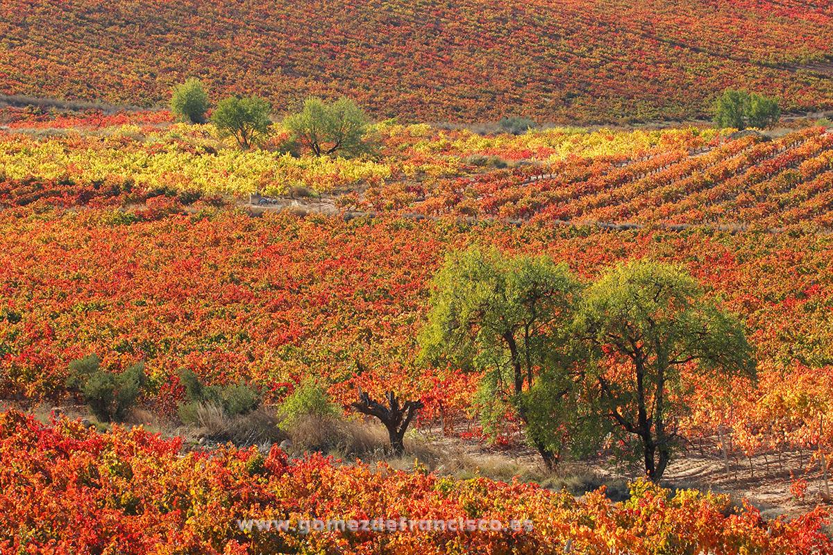 Cenicero (La Rioja) - La Rioja - J L Gómez de Francisco. Fotografía de paisaje de La Rioja - Landscapes from La Rioja