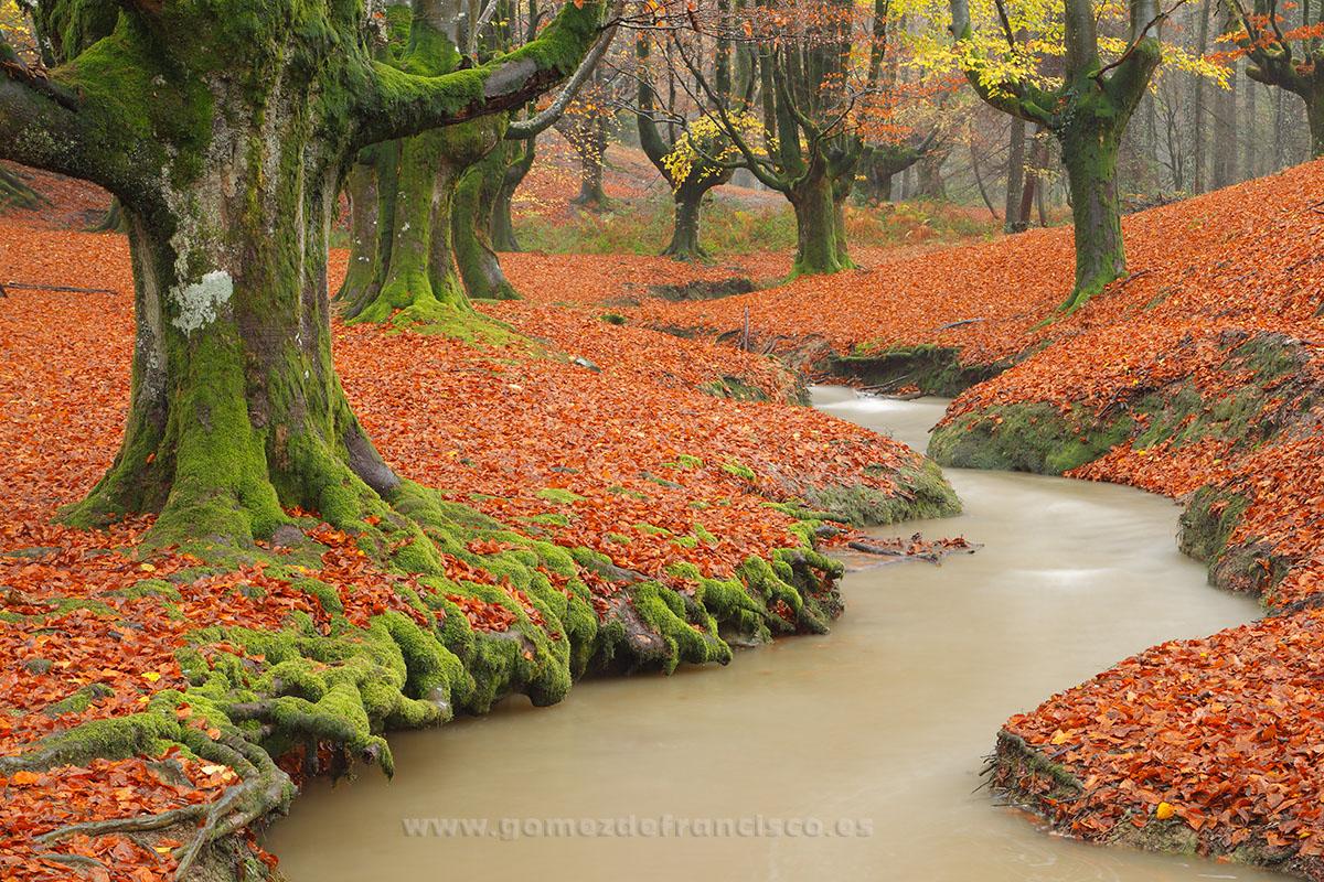 Otoño, Parque Natural del Gorbea (Vizcaya) - España - J L Gómez de Francisco. Fotografía de paisaje de España - Spanish landscape