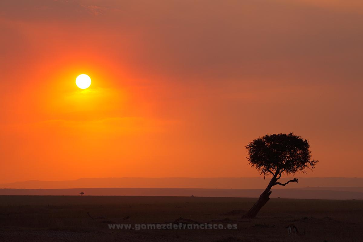 Atardecer en Masai Mara, Kenia - África - J L Gómez de Francisco. Fotografía de paisaje de África - Landscapes from Africa