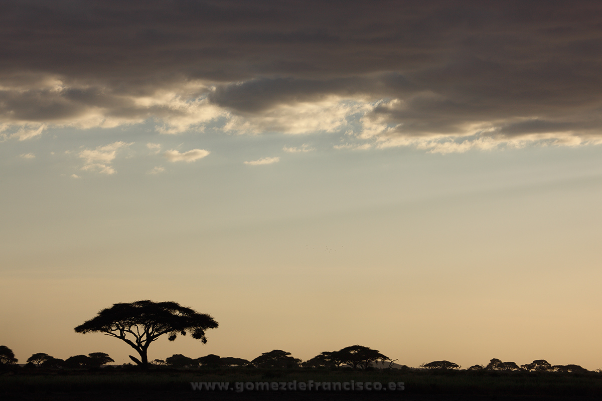 Parque Nacional de Amboseli, Kenia - África - J L Gómez de Francisco. Fotografía de paisaje de África - Landscapes from Africa