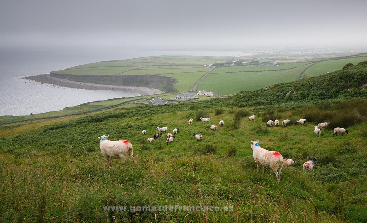 Ballingskelligs Bay, Irlanda - Irlanda - J L Gómez de Francisco. Fotografía de paisaje de Irlanda - Landscapes from Ireland