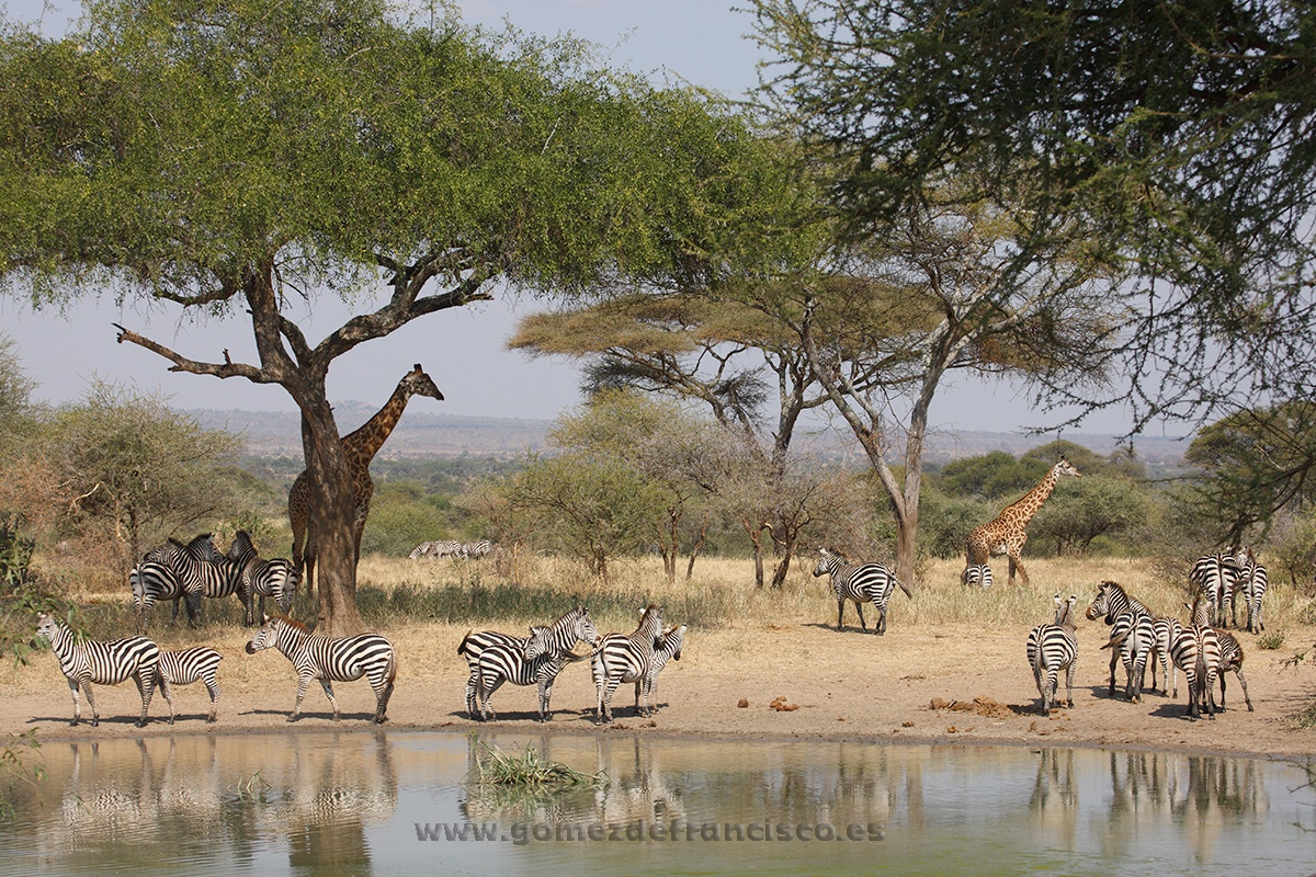 Parque Nacional de Tarangire, Tanzania - África - J L Gómez de Francisco. Fotografía de paisaje de África - Landscapes from Africa