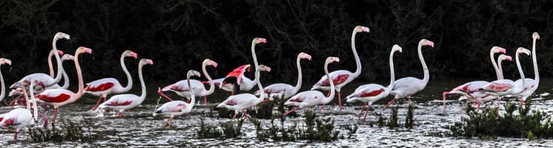Doñana - Juanma Bueno, fotógrafo