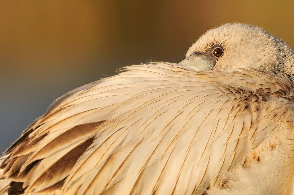 Phoenicopteriformes - Juanma Hernández · Fotografía de Naturaleza · Galería de Aves · Phoenicopteriformes