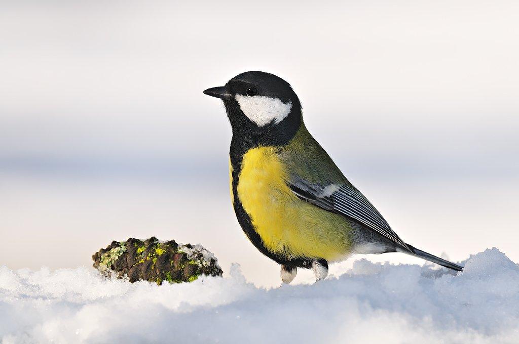 Passeriformes - Juanma Hernández · Fotografía de Naturaleza · Galería de Aves · Passeriformes