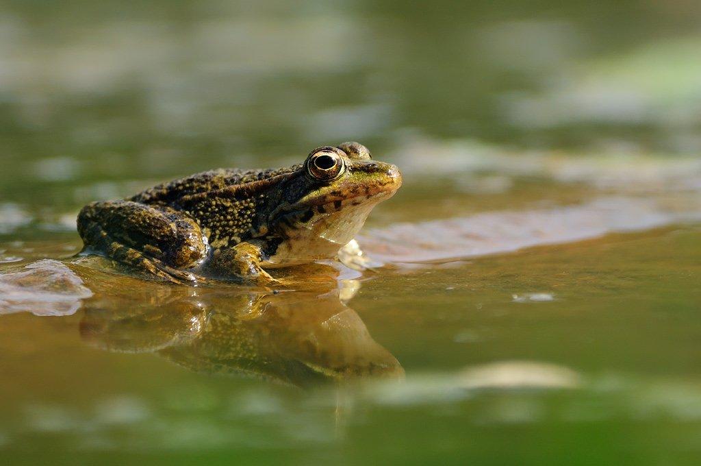 Fauna - Juanma Hernández · Fotografía de Naturaleza · Galería de fauna