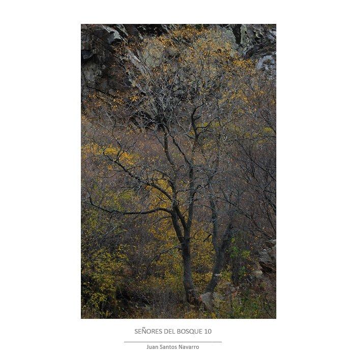 Señores del bosque - JUAN SANTOS NAVARRO, LUZ NATURAL