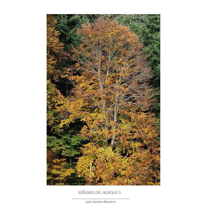 Señores del bosque - JUAN SANTOS NAVARRO, NATURE LIGHT