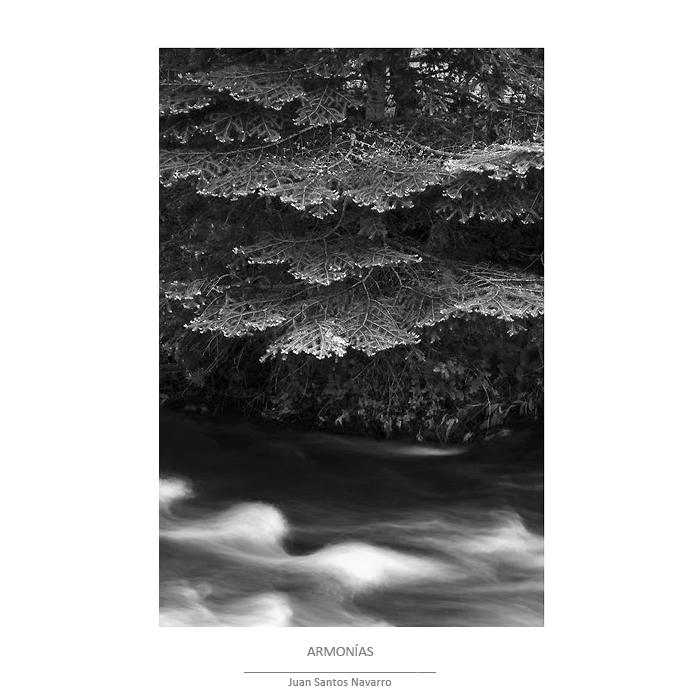 Escala de grises - bosque - JUAN SANTOS NAVARRO, LUZ NATURAL