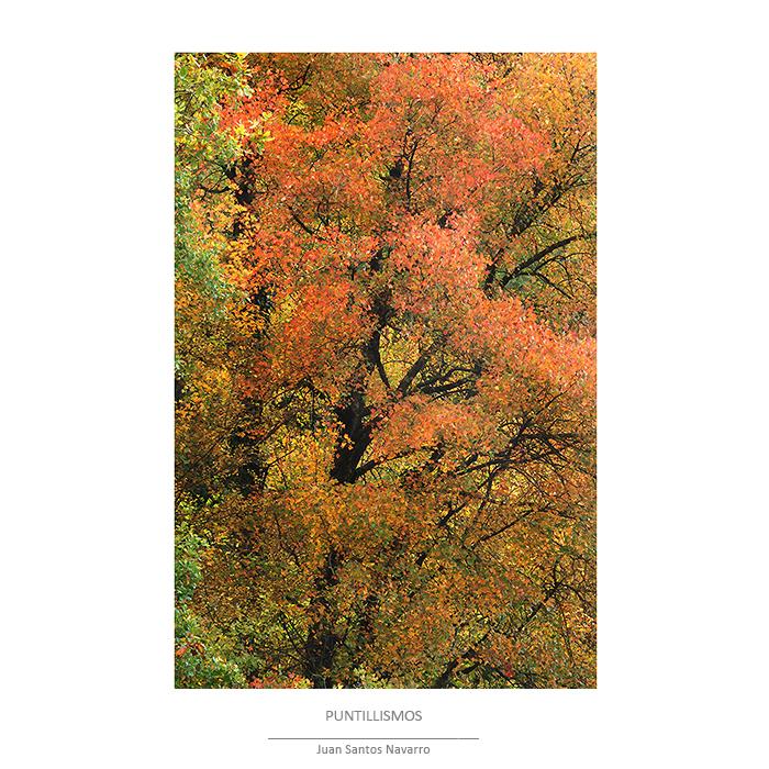 La magia del bosque 2 - JUAN SANTOS NAVARRO, LUZ NATURAL
