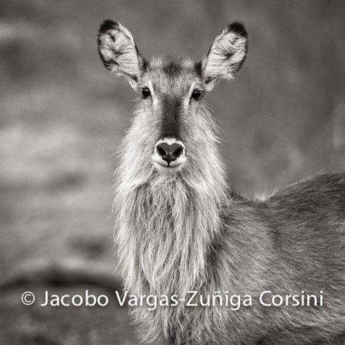 Exhibition in Villafranca del Bierzo 2013 - Jacobo Vargas, Photography