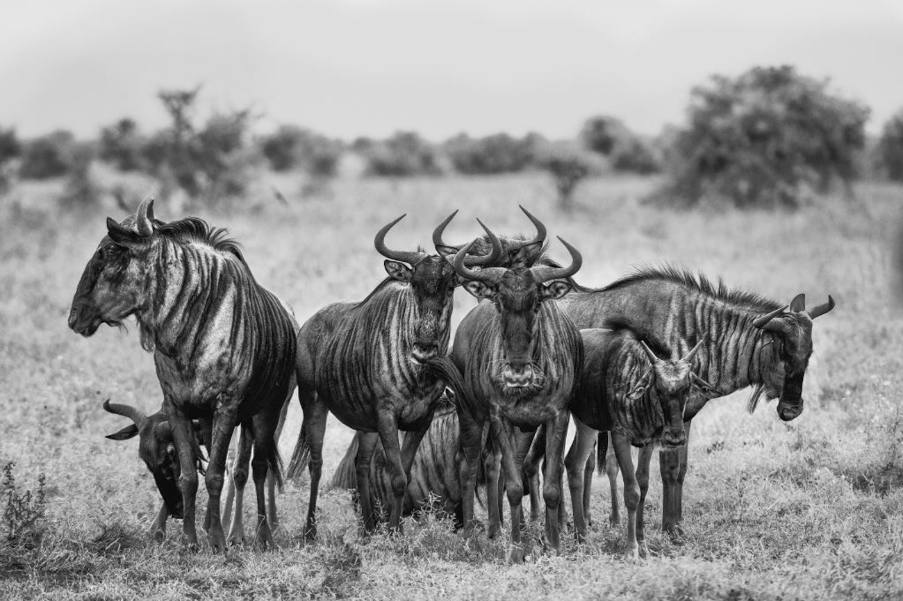 Wild Life - Jacobo Vargas, Photography