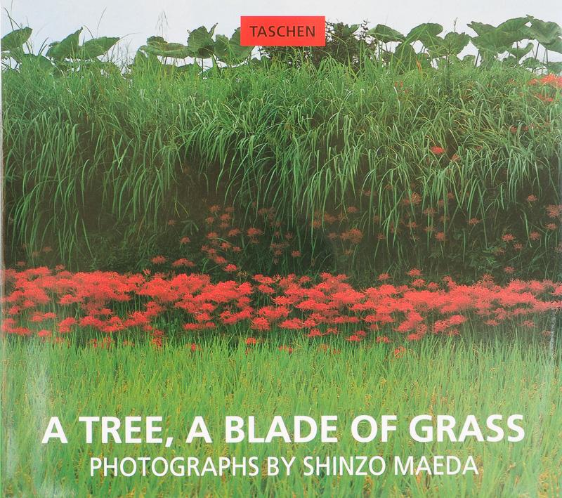 Shinzo Maeda- A tree, a blade of grass - fotógrafos - Visión Natural, fotografías de Koldo Badillo