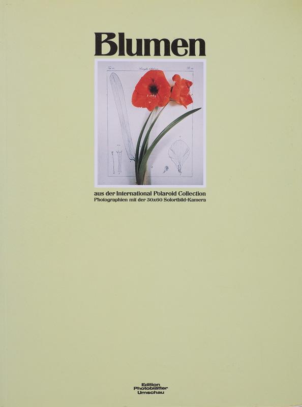 Blumen.jpg - fotógrafos - Natural Vision, photographs of Koldo Badillo