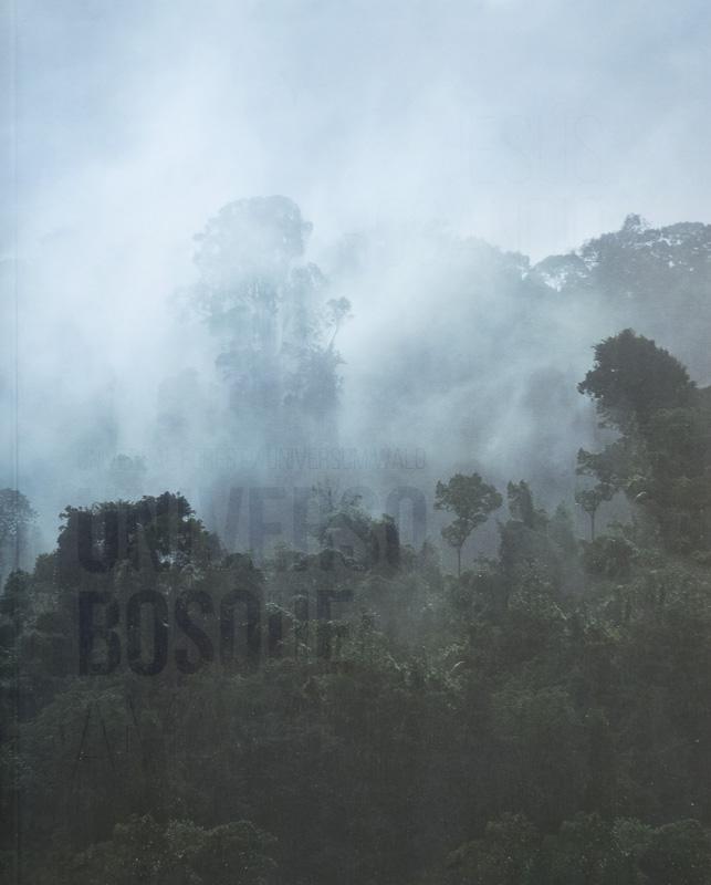Jesús Rocandio. Bosque Universo.jpg - fotógrafos - Natural Vision, photographs of Koldo Badillo