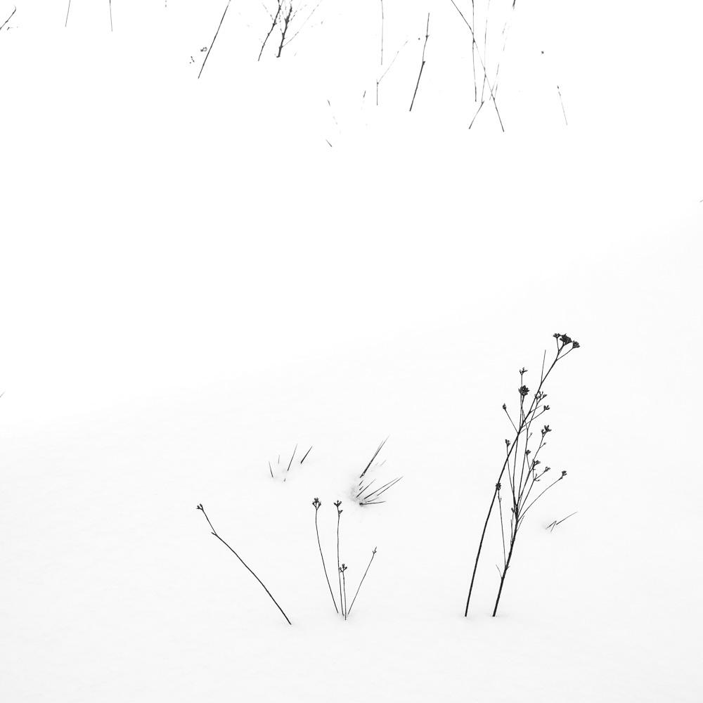 El lápiz de la Naturaleza - El lápiz de la Naturaleza