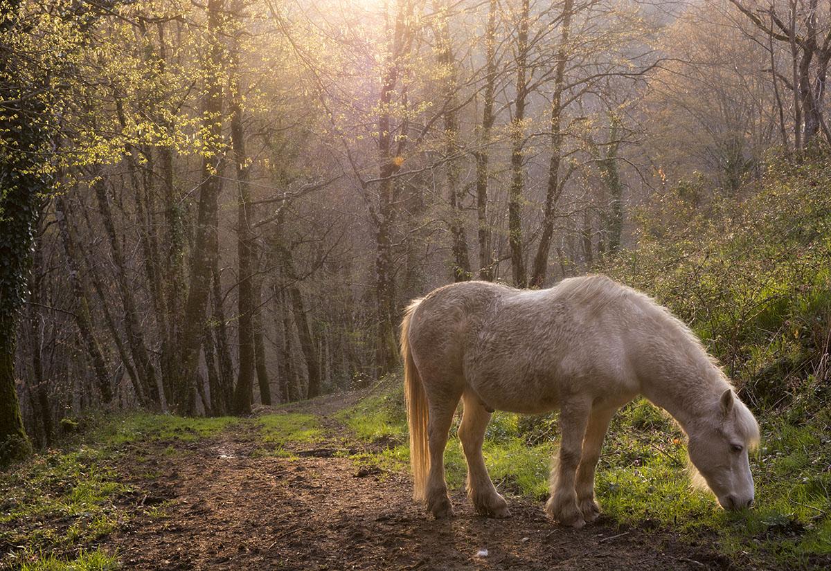 RInconcitos de la Corréze - Archivo - Iñaki Larrea, Fotografía de naturaleza y montaña