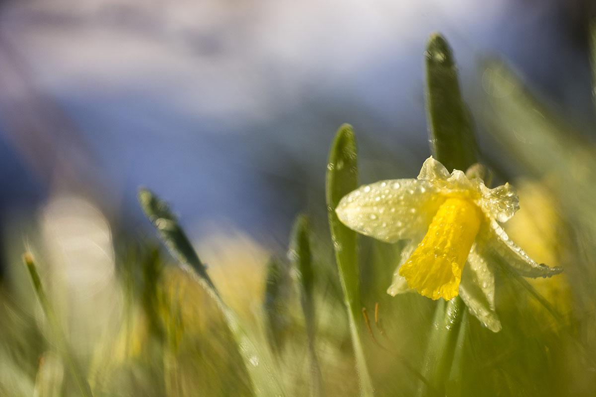 Primavera!! - Archivo - Iñaki Larrea, Fotografía de naturaleza y montaña
