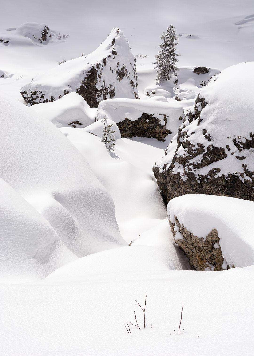 El exito del cauto - Archivo - Iñaki Larrea, Fotografía de naturaleza y montaña