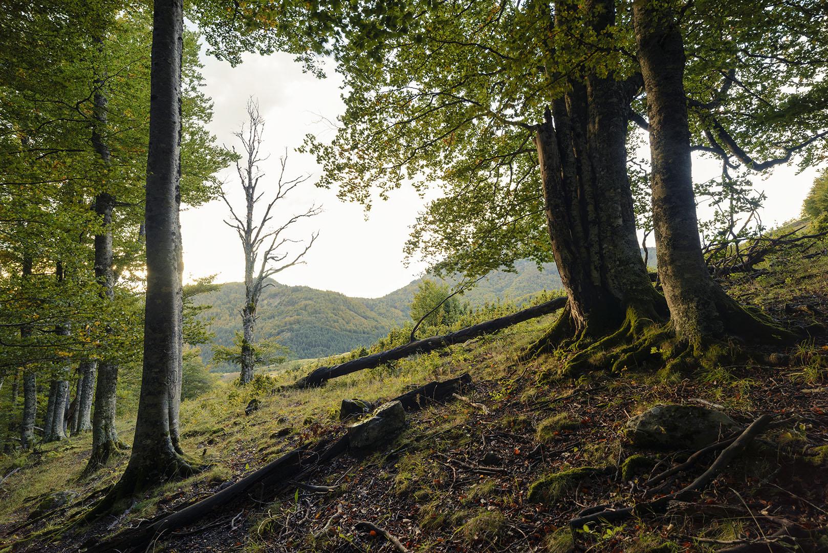 Adorando al superviviente - Archivo - Iñaki Larrea, Fotografía de naturaleza y montaña