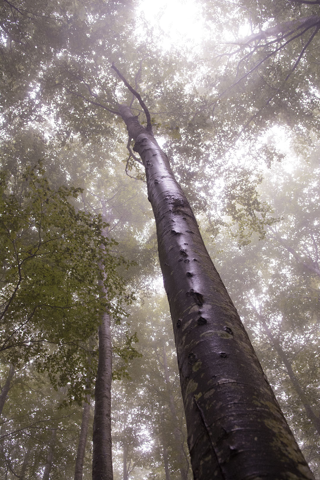 Sintiendo la lluvia - Archivo - Iñaki Larrea, Fotografía de naturaleza y montaña