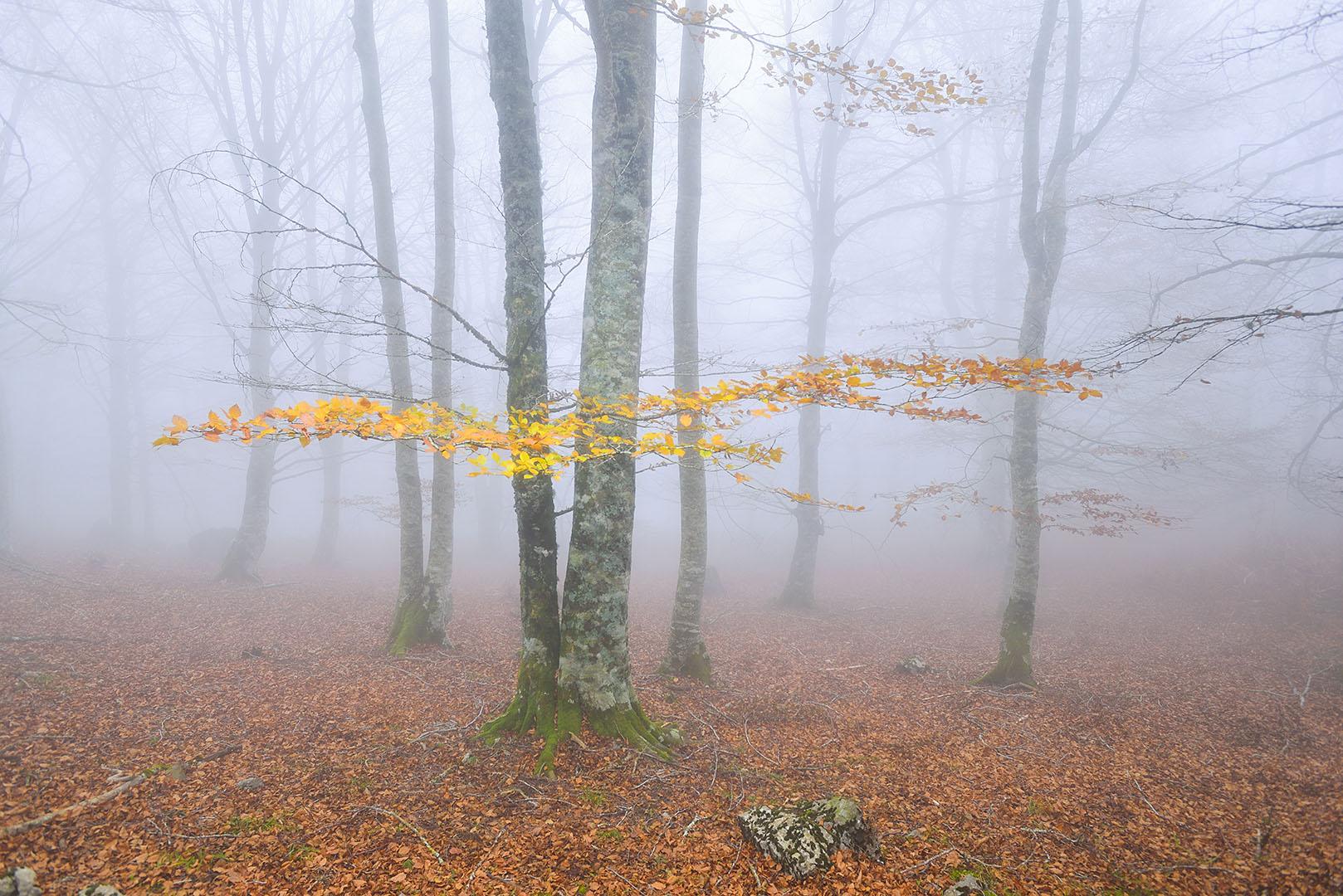El guardián del otoño - Nuevas capturas - Nuevas capturas