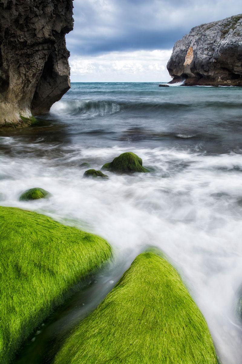 Alfombra verde - Archivo - Iñaki Larrea, Fotografía de naturaleza y montaña