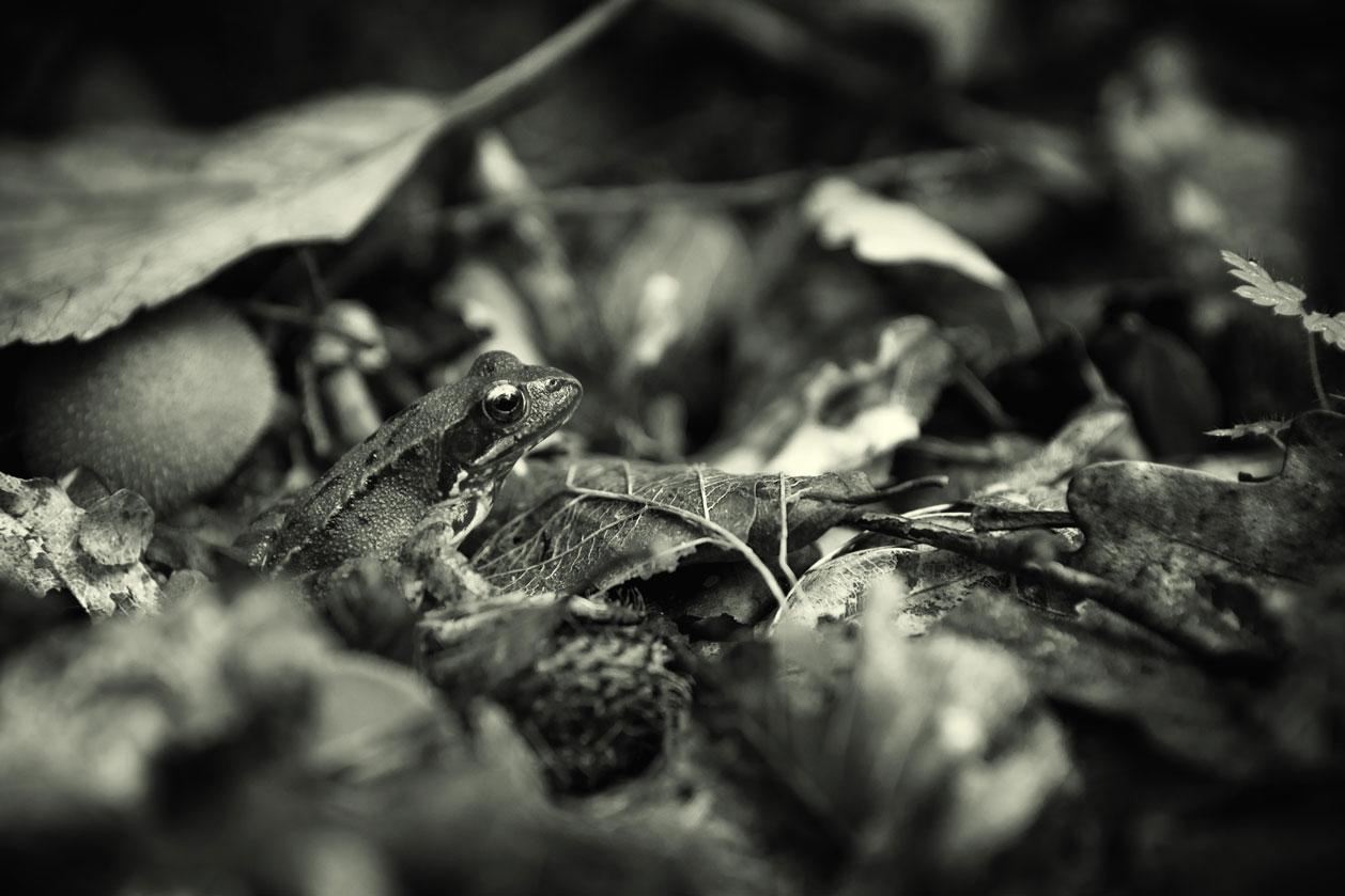 Mientras tanto en el suelo - Archivo - Iñaki Larrea, Fotografía de naturaleza y montaña