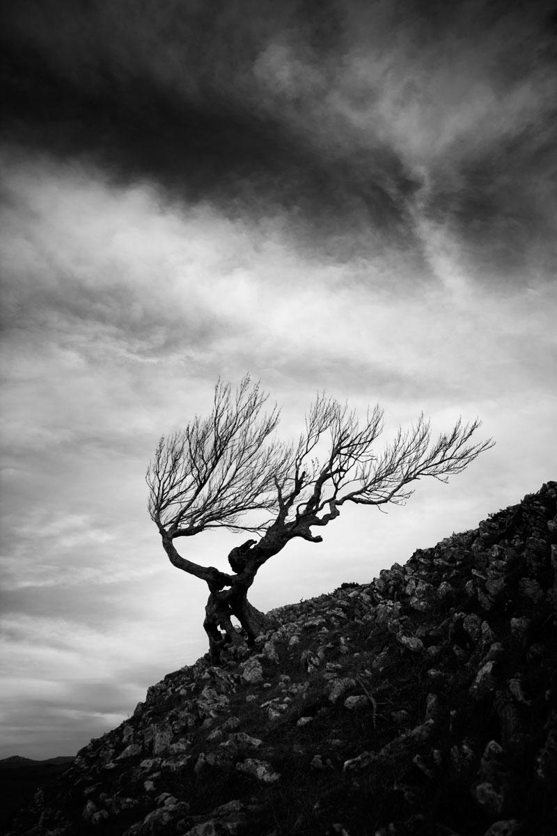 Superviviente - Archivo - Iñaki Larrea, Fotografía de naturaleza y montaña