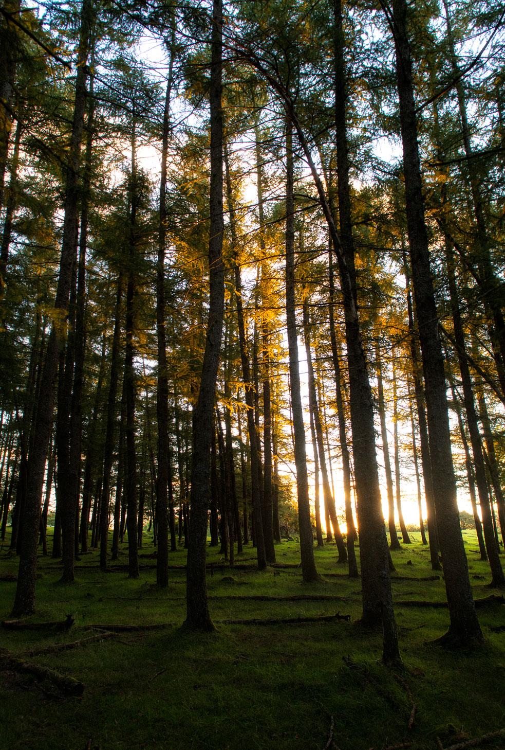 crepusculo boscoso - Archivo - Iñaki Larrea, Fotografía de naturaleza y montaña