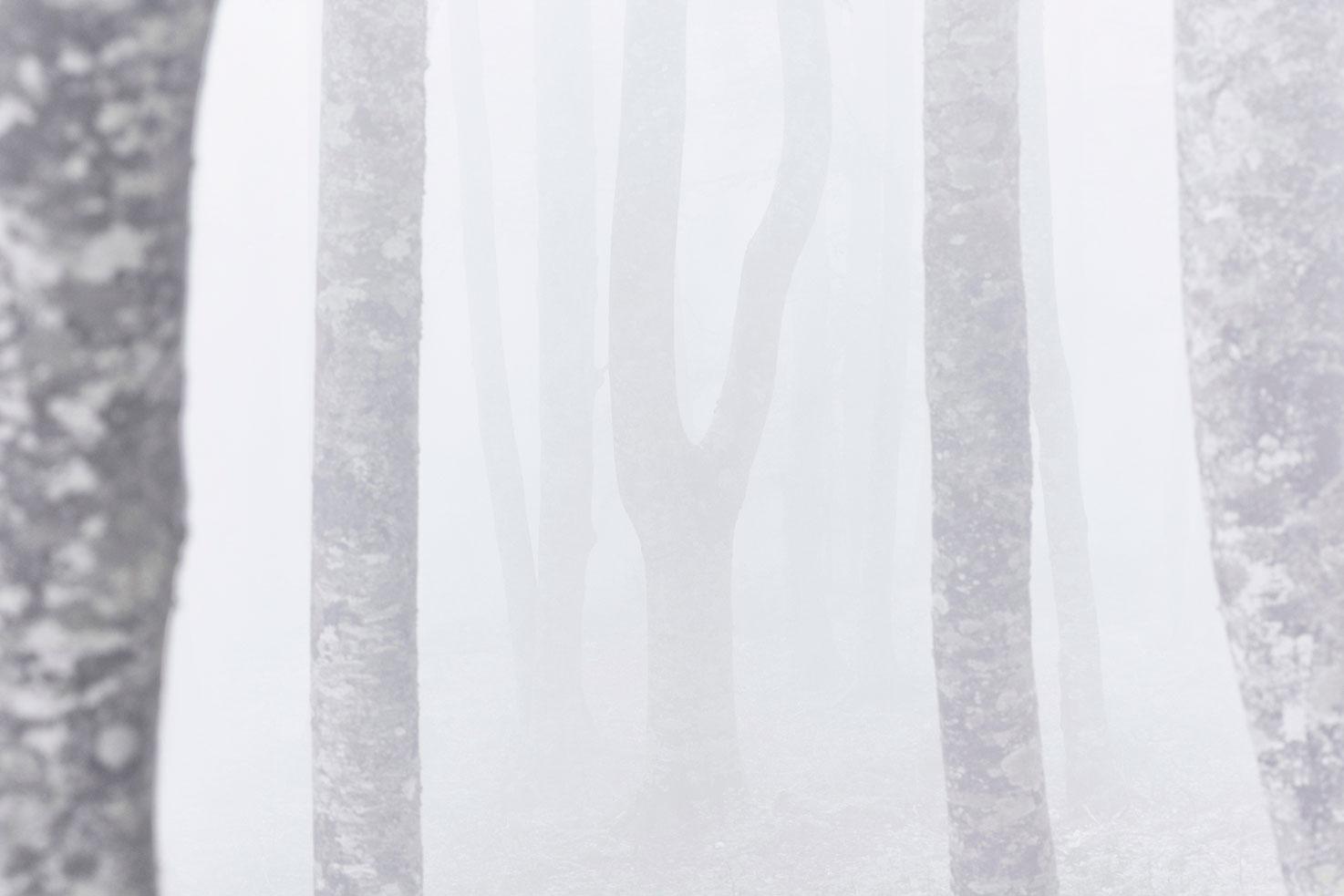 espectros en la niebla - Archivo - Iñaki Larrea, Fotografía de naturaleza y montaña