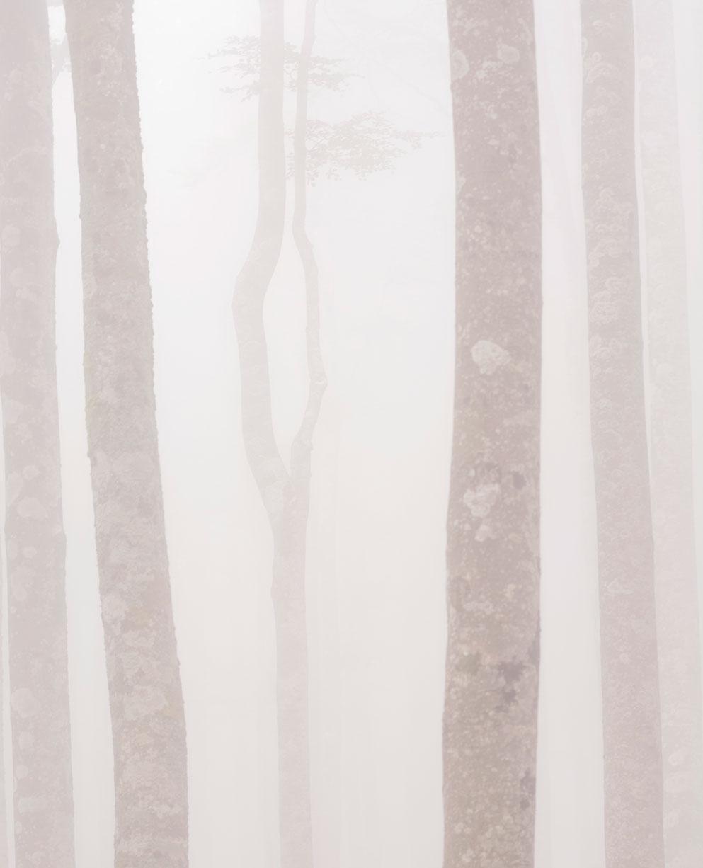 Espectros en la niebla 2, Aralar. - Archivo - Iñaki Larrea, Fotografía de naturaleza y montaña