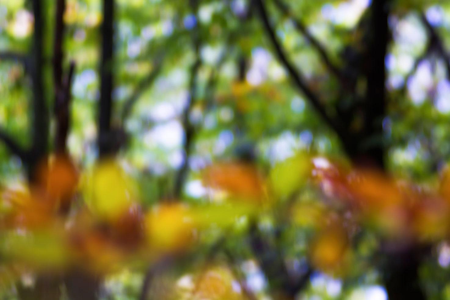 Colores. - Archivo - Iñaki Larrea, Fotografía de naturaleza y montaña