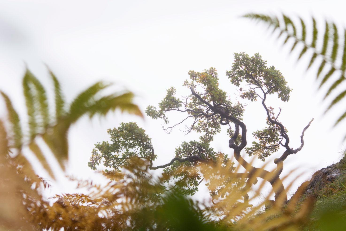 Laberinto vegetal. - Archivo - Iñaki Larrea, Fotografía de naturaleza y montaña