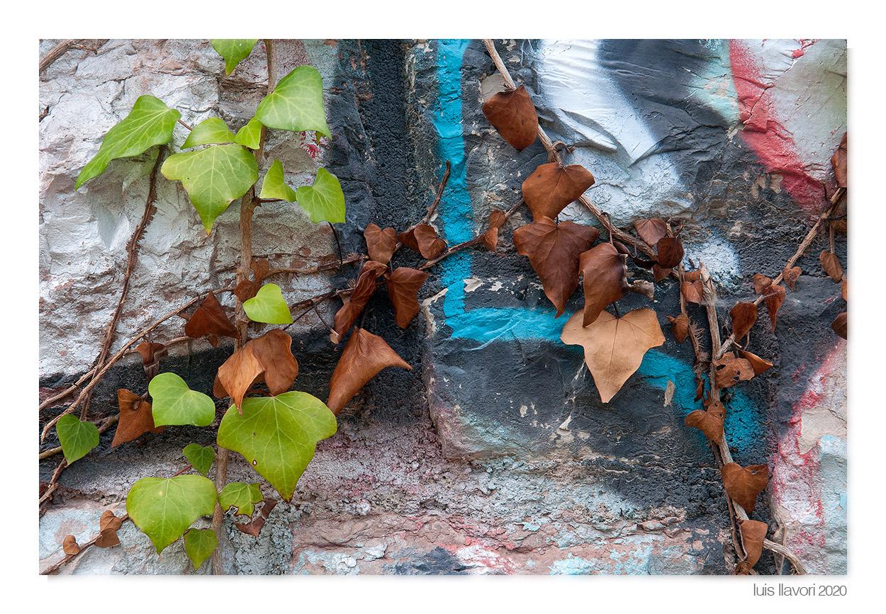 02 - Naturaleza urbana - Luis Llavori , Fotografía