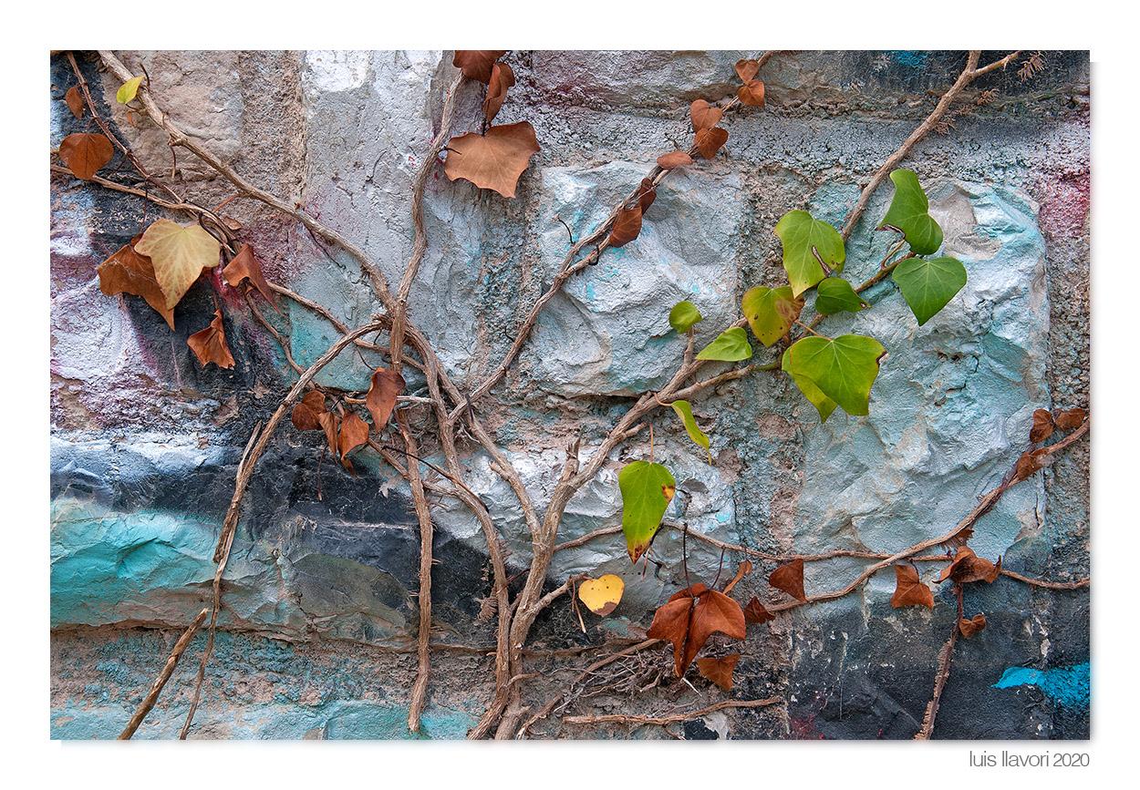 05 - Naturaleza urbana - Luis Llavori , Fotografía
