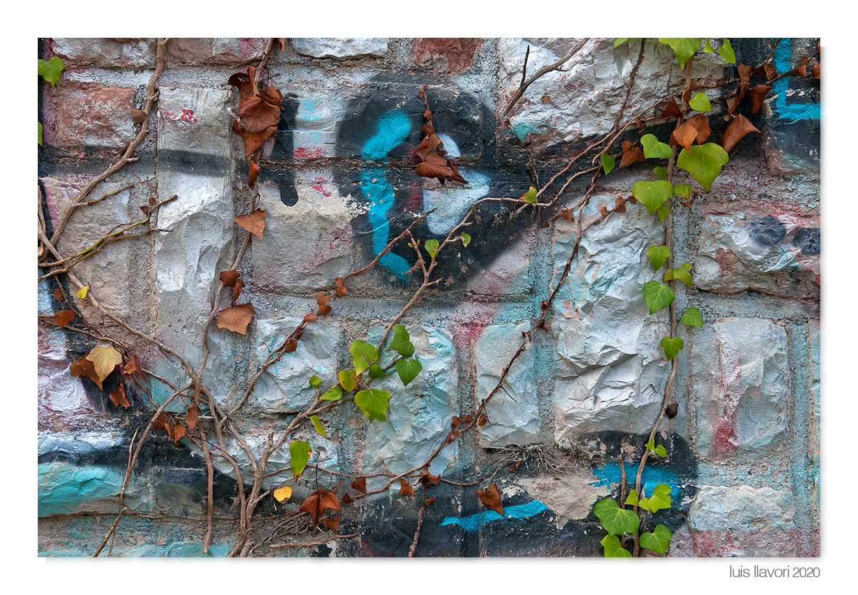 03 - Naturaleza urbana - Luis Llavori , Fotografía