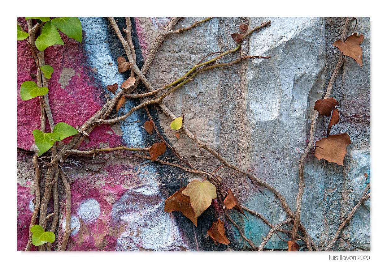 04 - Naturaleza urbana - Luis Llavori , Fotografía