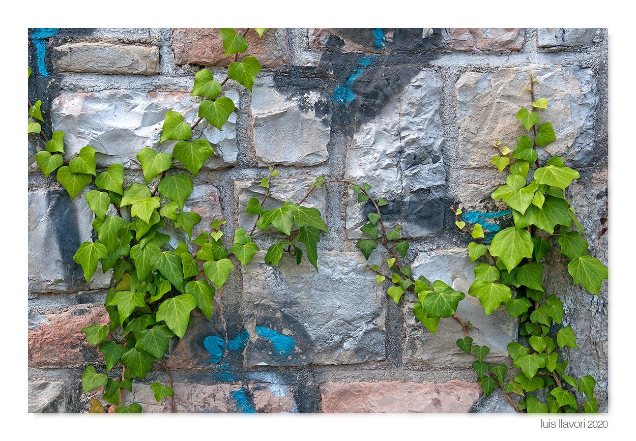 06 - Naturaleza urbana - Luis Llavori , Fotografía