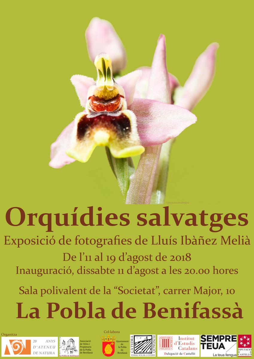 Les nostres orquídies - LLUIS IBAÑEZ MELIA, Geografies als Ports Maestrat