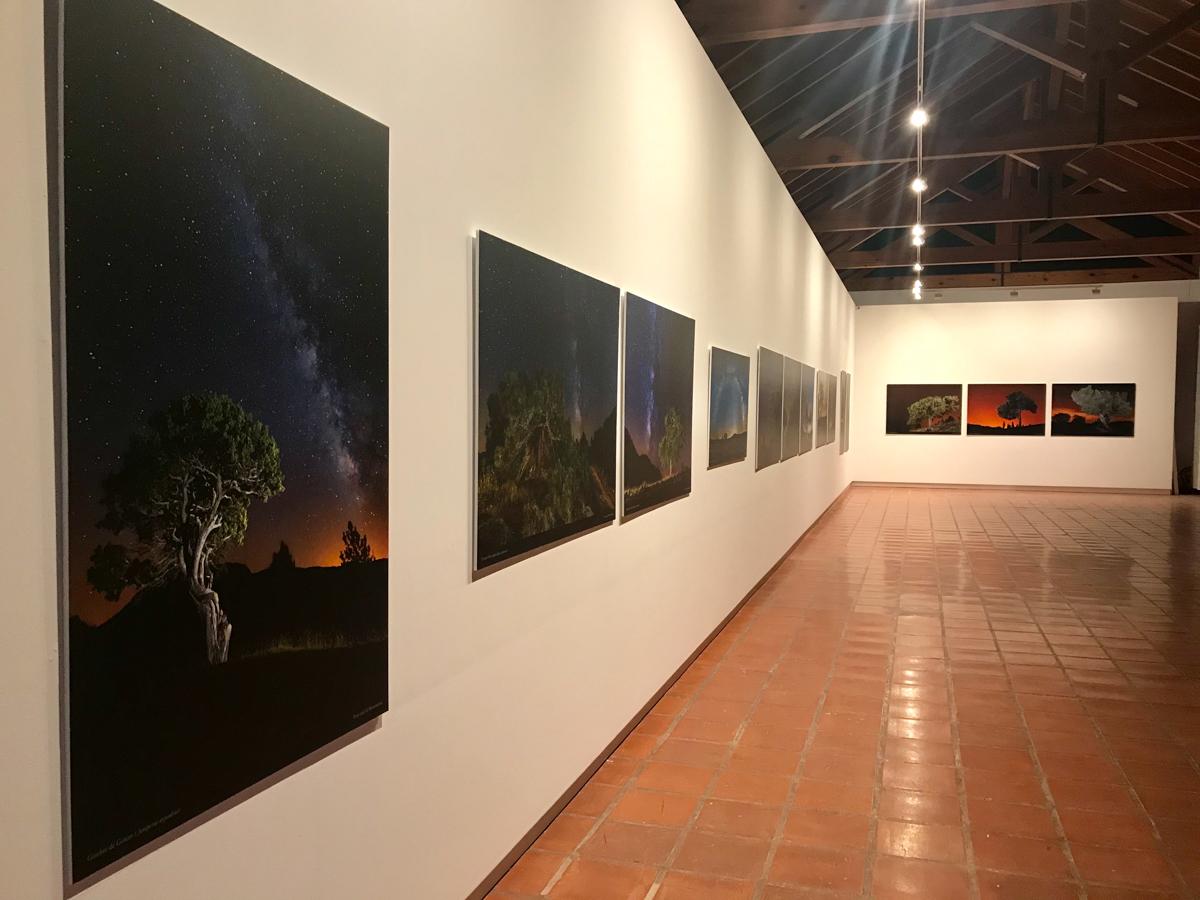 Jardí Bottànic València - Quan dormen els Arbres - LLUIS IBAÑEZ MELIA, Geografies als Ports Maestrat