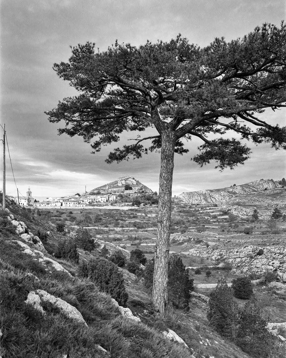 El Pi de la Coveta. Castell de Cabres - Arbres