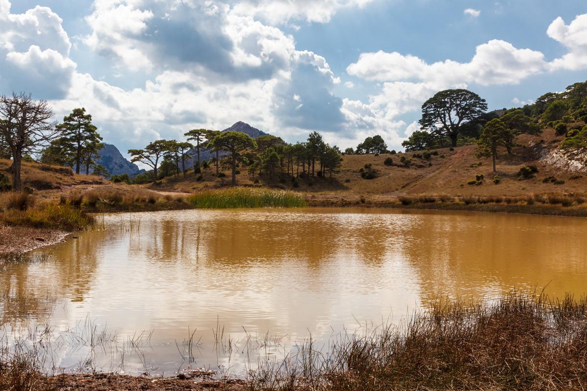 El Rojal de la Refoia - Arbres de les nostres terres - LLUIS IBAÑEZ MELIA, Geografies als Ports Maestrat