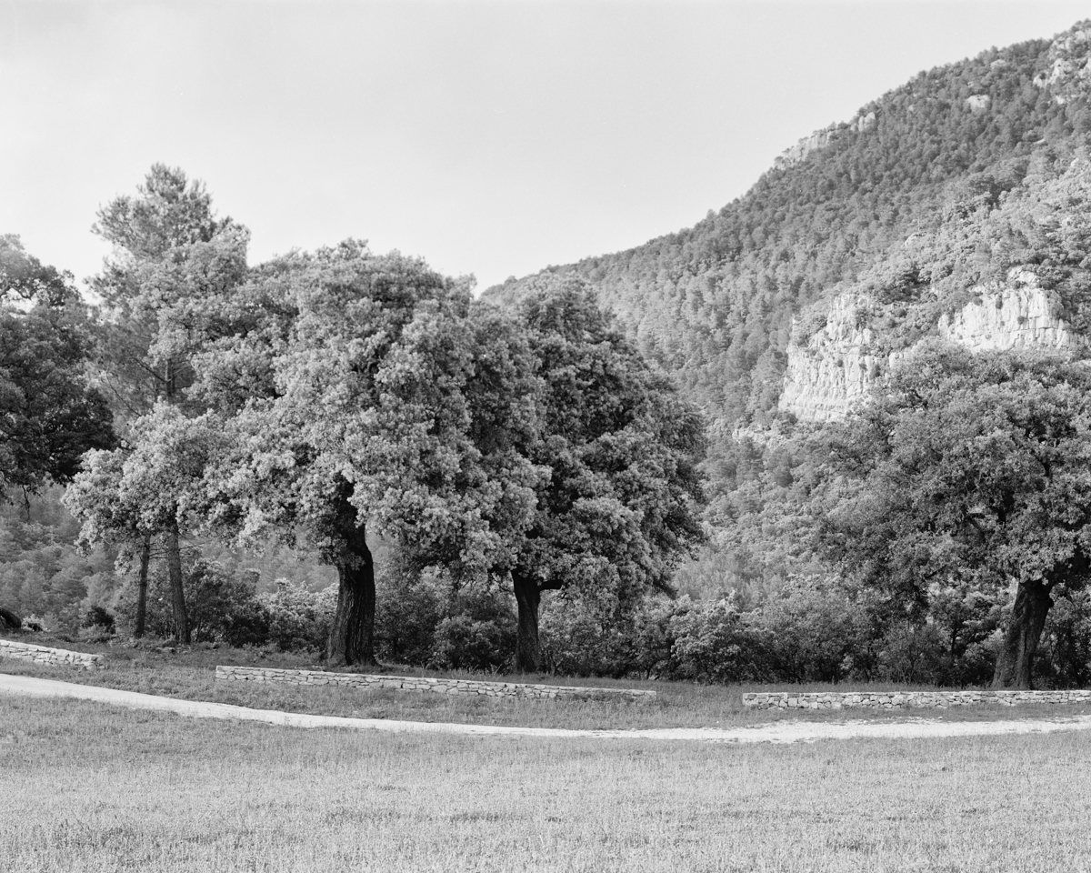 Les Carrasques de Sant Domingo. Vallibona - Arbres
